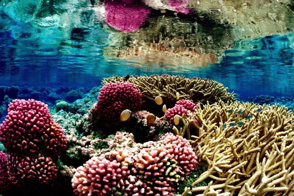 South China Sea coral reefs (Photo: Getty Images)