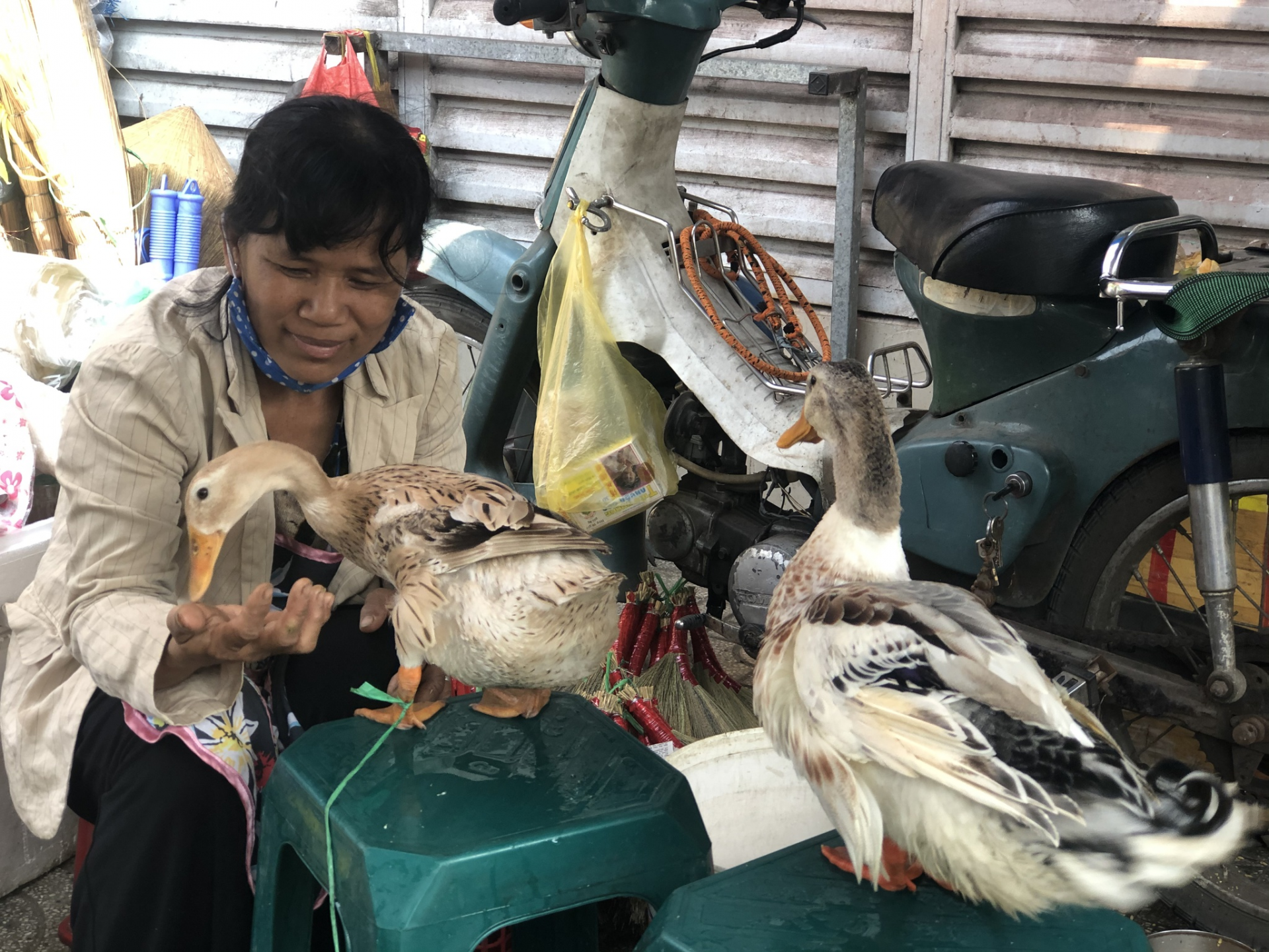 To Tuyet, the ducks are more than just pets. Photo: Quyen Tran