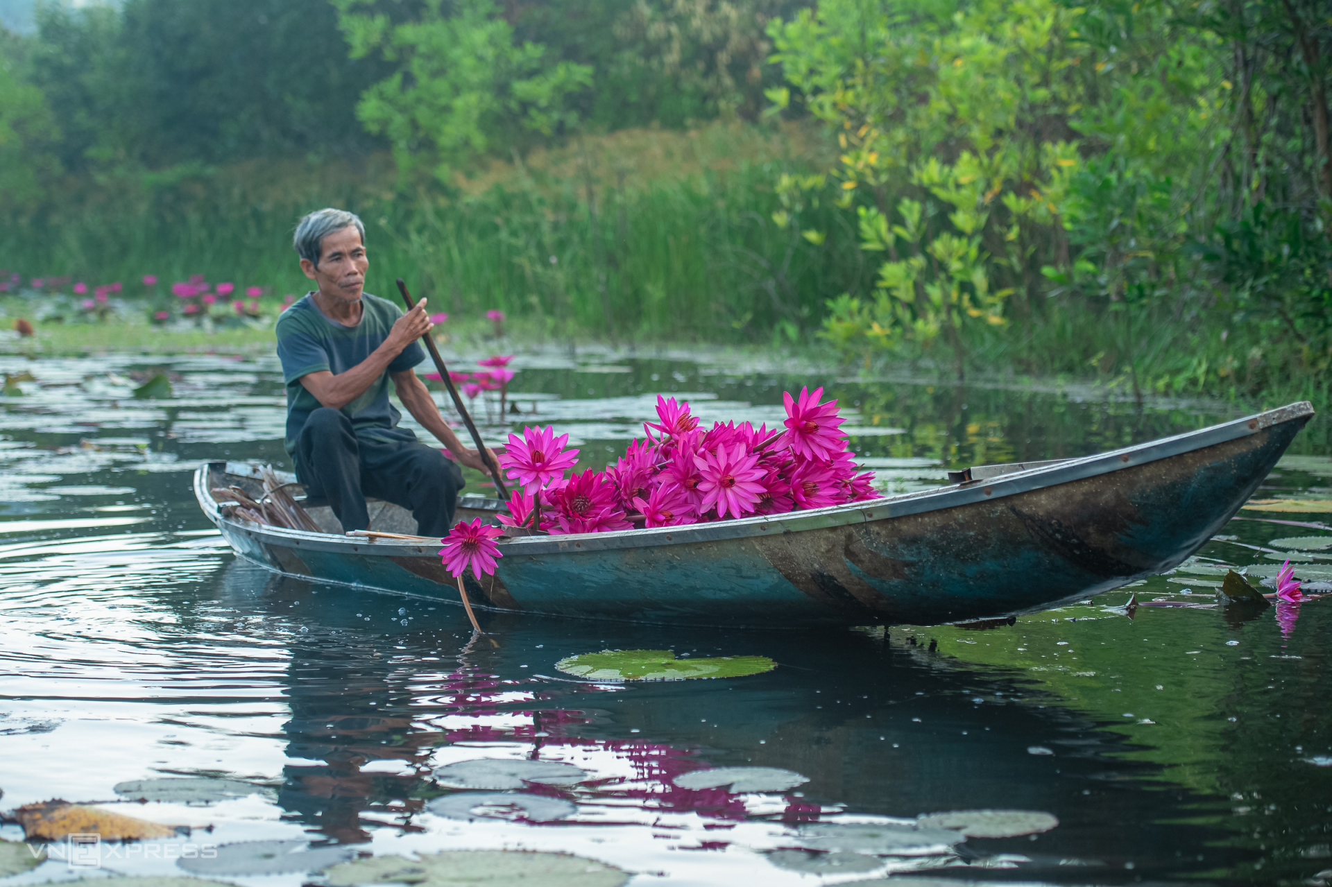 Chu rows a boat to pick water lilies and tend to grass carp raised in the pond. (Photo: VnExpress)