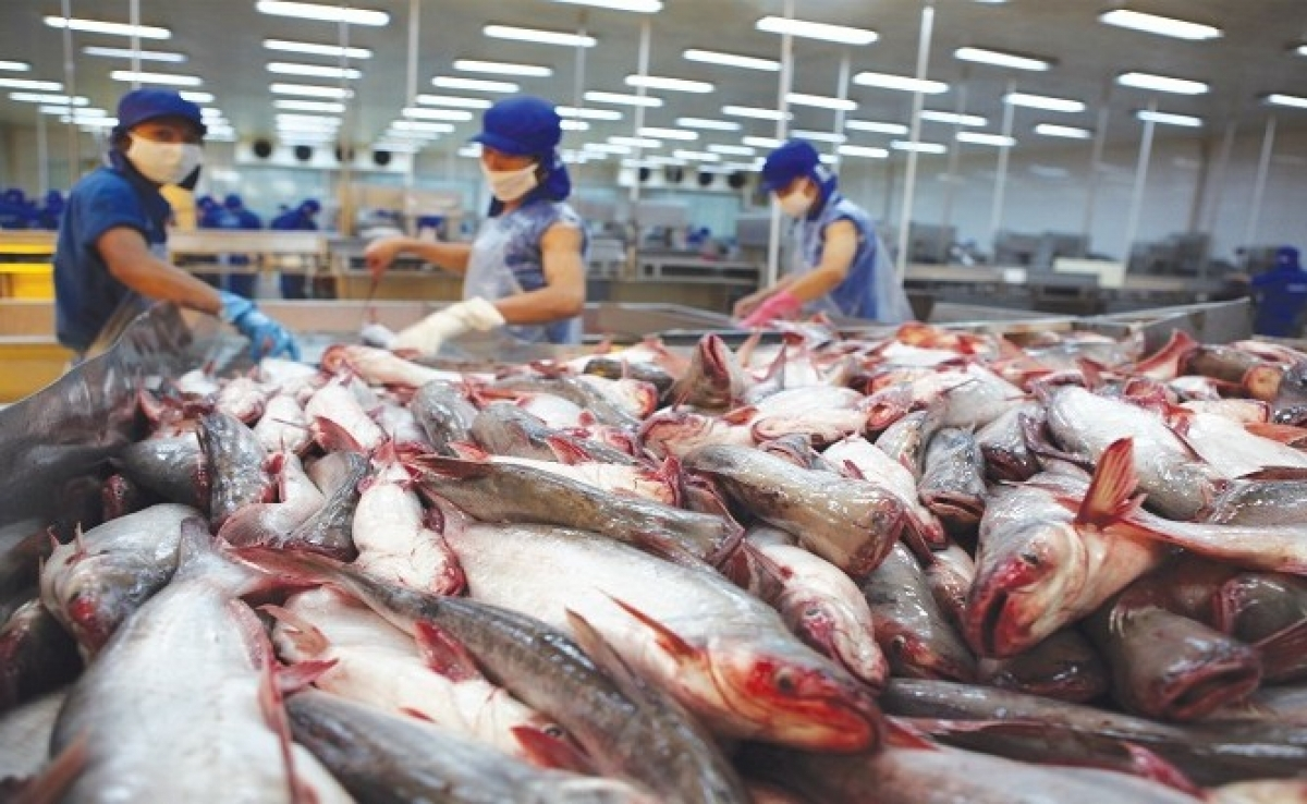 Vietnam's pangasius exports rise on global demand