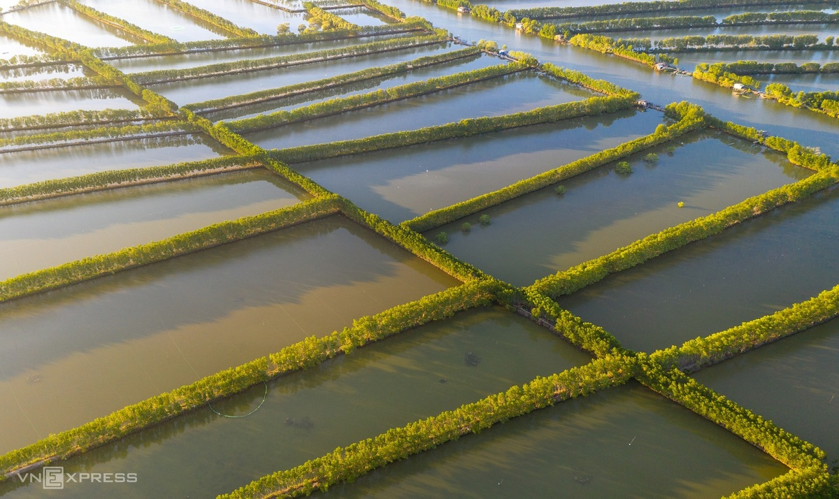 The green mangrove forests with all kinds of mangrove plants and parrots have been the home for many species of birds for many years.  Photo: VnExpress