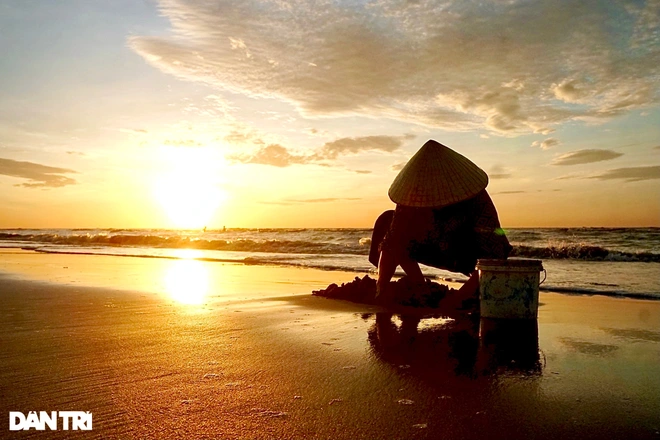 An old woman catching clams on the beach at dawn.  Photo: Dantri