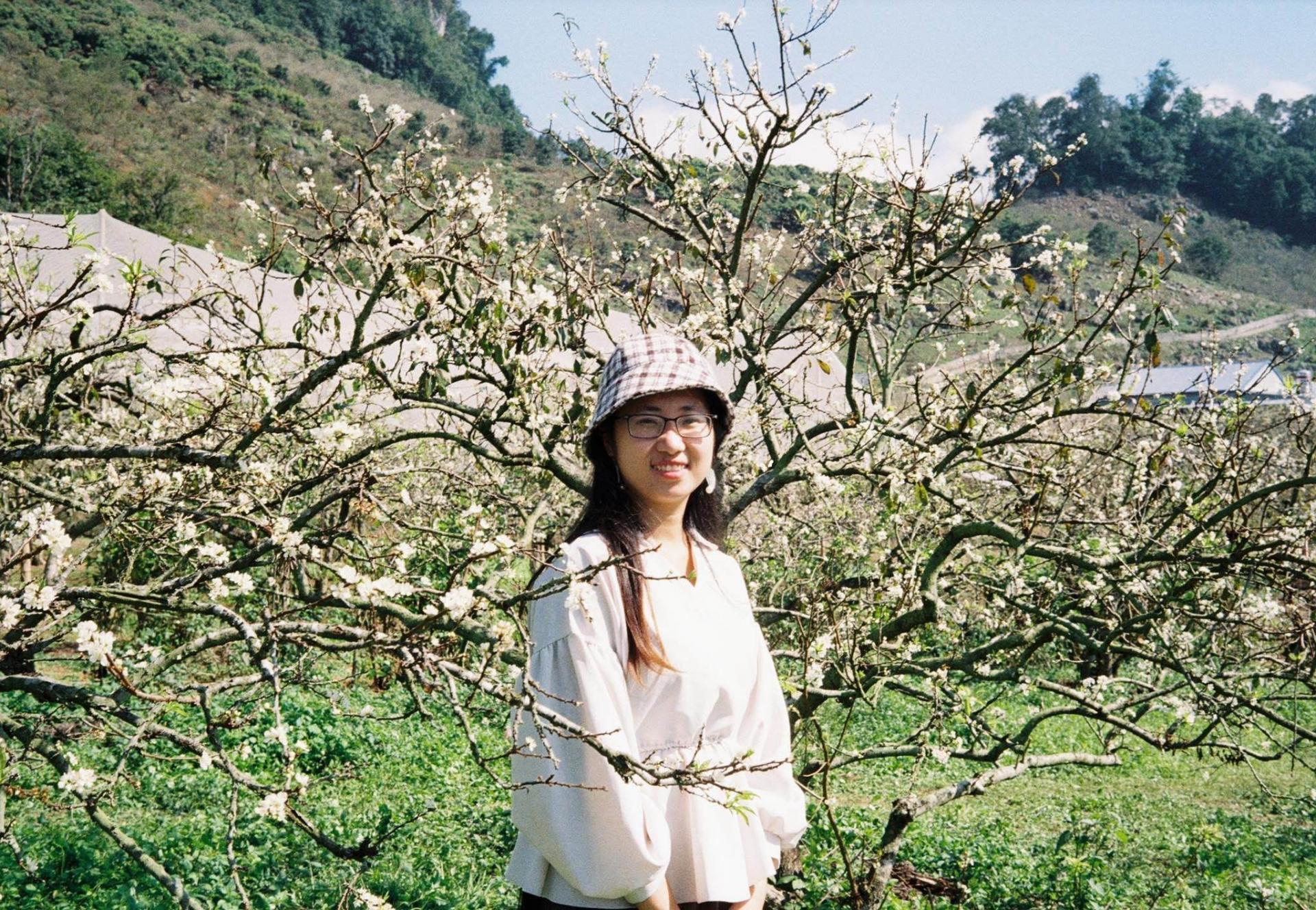 Plum flower season at Moc Chau. Photo: NVCC