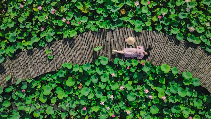 This is one of the most favorite places of young people and photographers when the lotus blooms, to capture every moments of it.  Photo: Vietnam+
