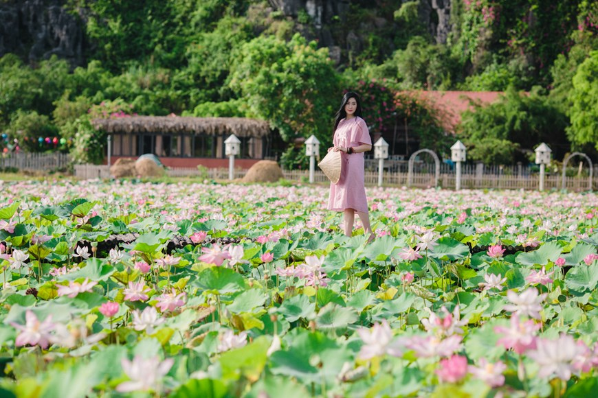 The charming lotus pond attract many visitors for its outstanding beauty.  Photo: Vietnam+