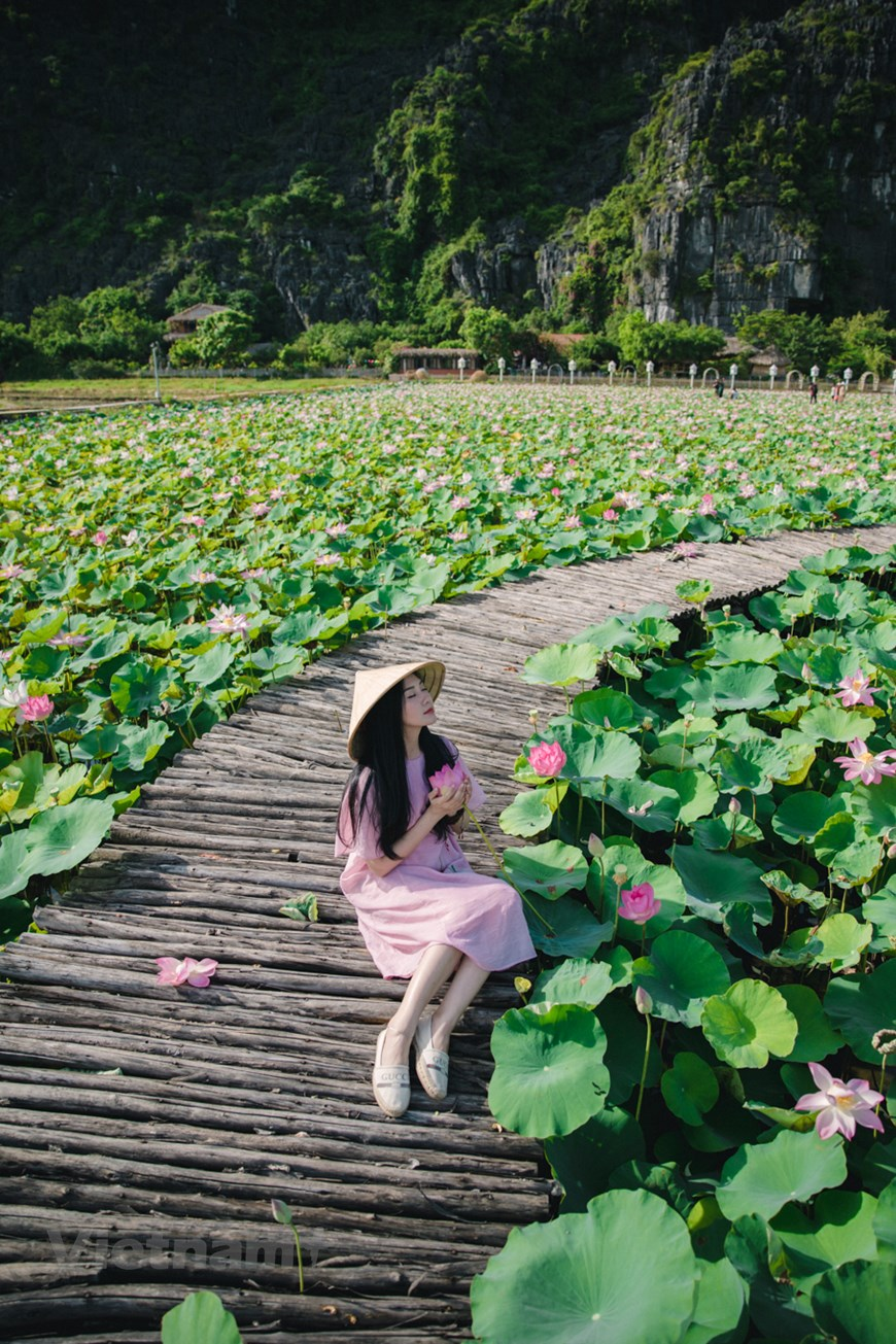 Walking among the lotus flowers and breathing the fresh scent is the most amazing experience for tourists when coming to this place.  Tourists can have alluring pictures with such a beautiful background.  Photo: Vietnam+