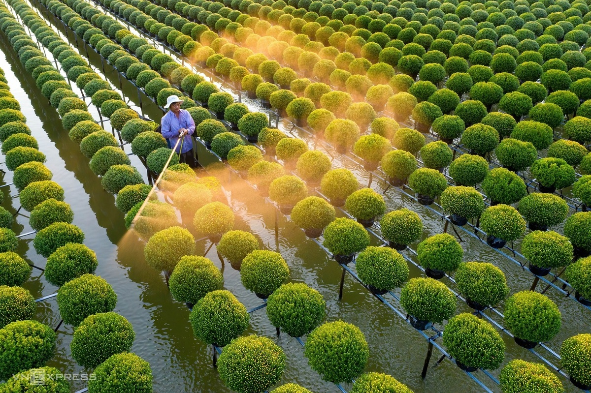 One of Minh Luong's favorite places in Dong Thap is the raspberry chamomile flower fields in Tan Khanh Dong Commune. This is where local people plant these famous flowers and sell them in Tet holiday, as it is a symbol for prosperity and happiness.  Photo: VnExpress