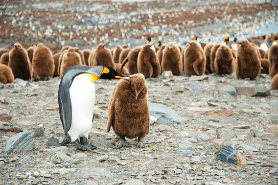 Photo: Swoop Antarctica