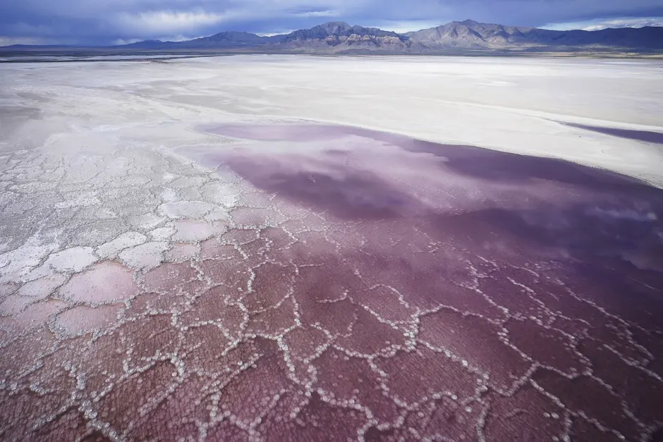 Pink water washes over a salt crust along the receding edge of the Great Salt Lake. Photograph: Rick Bowmer/AP
