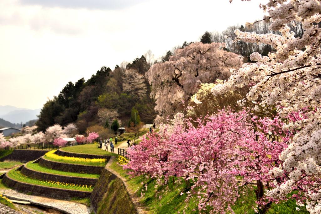 Photo: Japan Dramatic Scene
