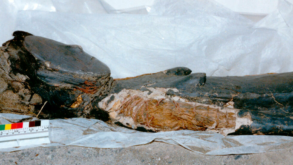 Chinchorro mummies were either painted red, black or wrapped in bandages Bernardo Arriaza Centro Gestion Chinchorro/AFP/File