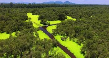 Explore Tra Su Cajuput Forest - The Enchanted Green Wonderland of Vietnam