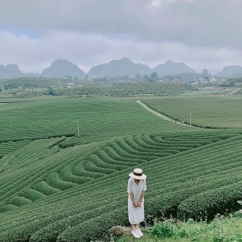 Journey to Dong Giang Tea Hill – Green Paradise in Danang