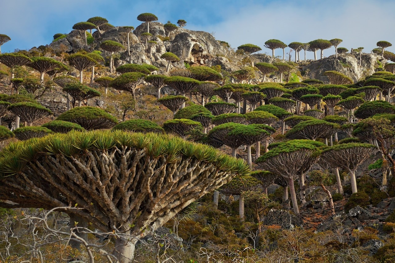Isolated Socotra - Discover The Strangest Alien – Like Place in The World