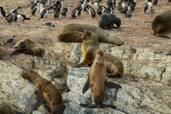 Visit Tierra del Fuego: Beautiful Nature At The End of The World