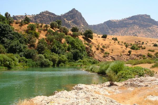 Photo: Nature Iraq Twitter