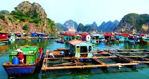 Photo: Paradise Elegance Cruise Halong