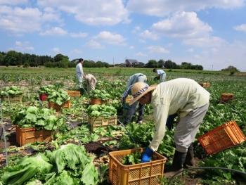 Ibaraki - favourite destination for Vietnamese agricultural apprentices
