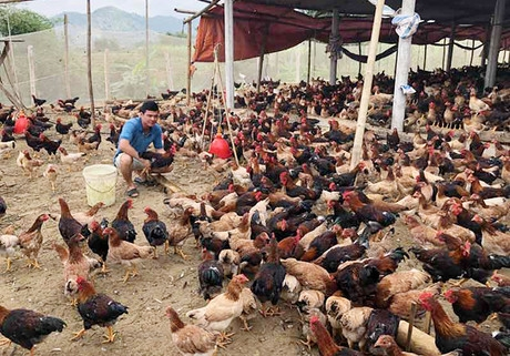 Sustainable livelihoods support for smallholder farmers in Hoa Binh
