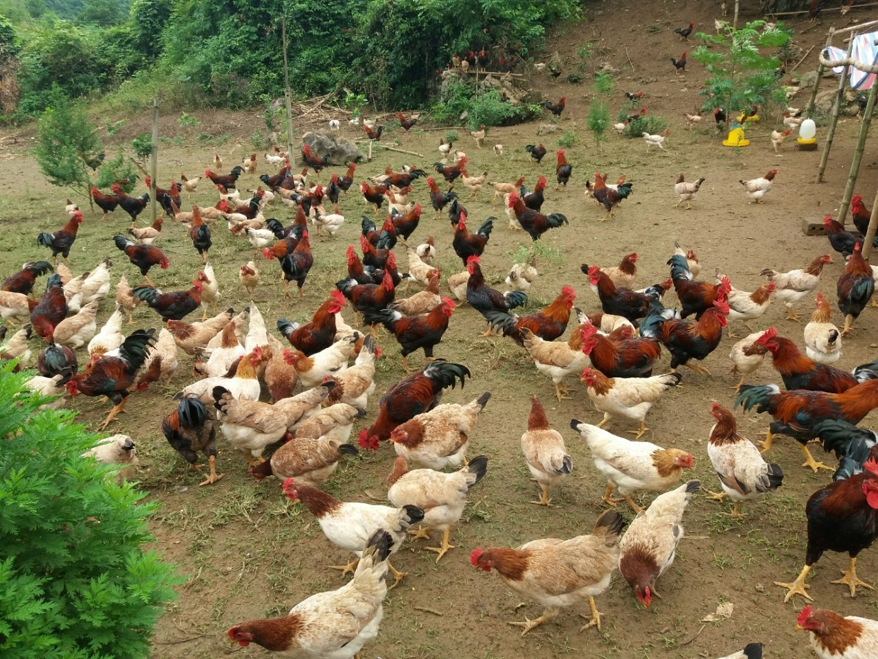 Sustainable livelihoods support for smallholder farmer in Hoa Binh