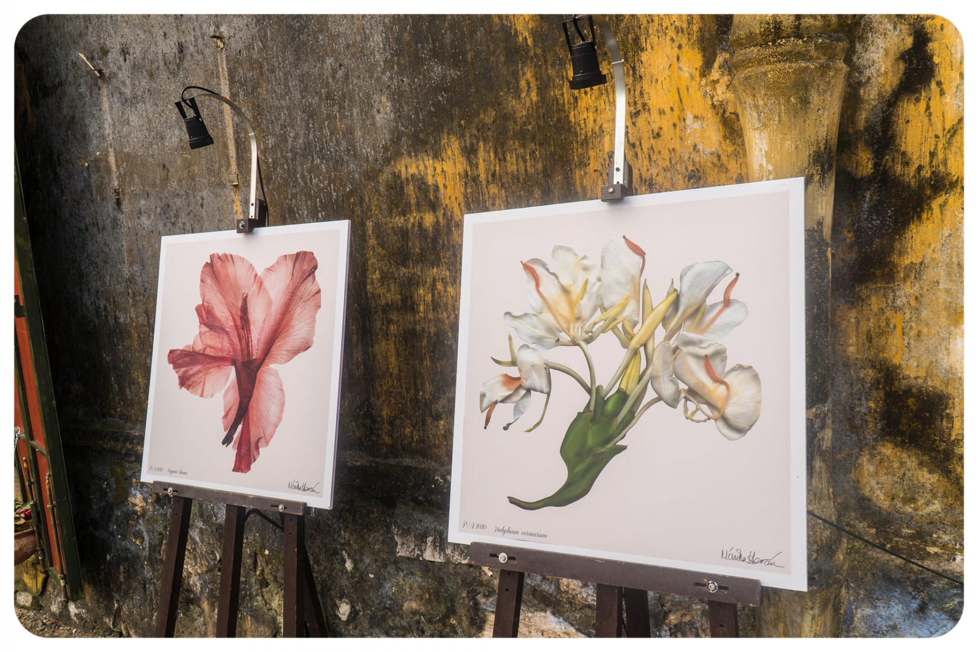 Exhibition introduces colombian flowers in hoi an city