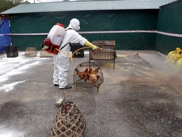 agriculture ministry requests boosting avian flu fight