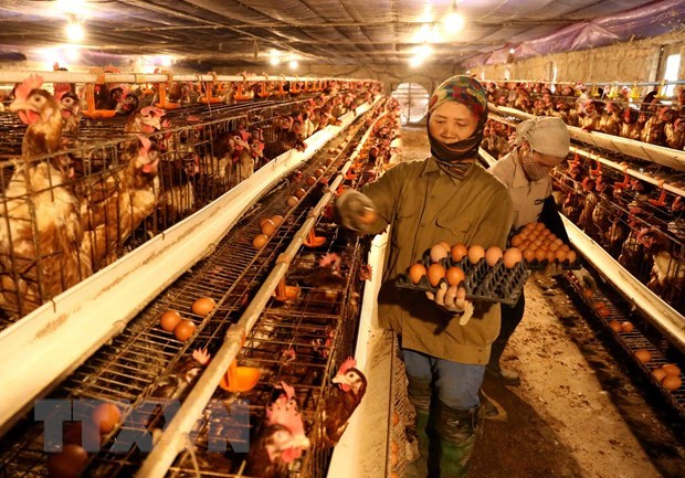 pm orders attention to bird flu fight