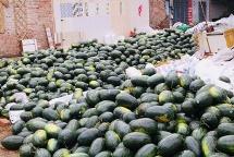 qatars embassy rescues 4 tons of watermelon