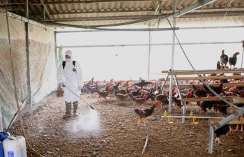 MARD Minister urges early detection of avian influenza outbreaks