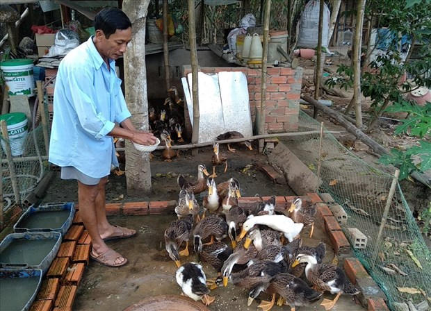 tra vinh culls nearly 1000 ah5n1 infected poultry