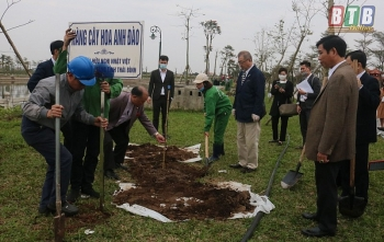 60 Japanese cherry trees presented to Thai Binh province