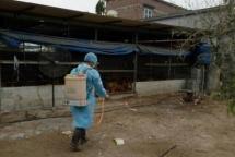 hai phong reports cases of ah5n6 avian flu outbreak
