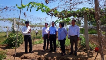 Japan's NGO builds vegetable processing facility in Ben Tre