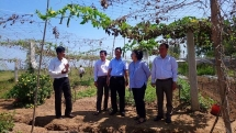 24 ro water purifier systems installed in 35 water plants in ben tre