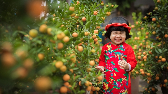 Kumquat tree - plant for Tet and its interesting facts
