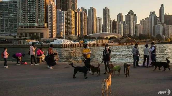 hong kong confirms pet dog infected with covid 19