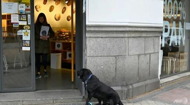 how a dog become a get out of jail card in lockdown spain