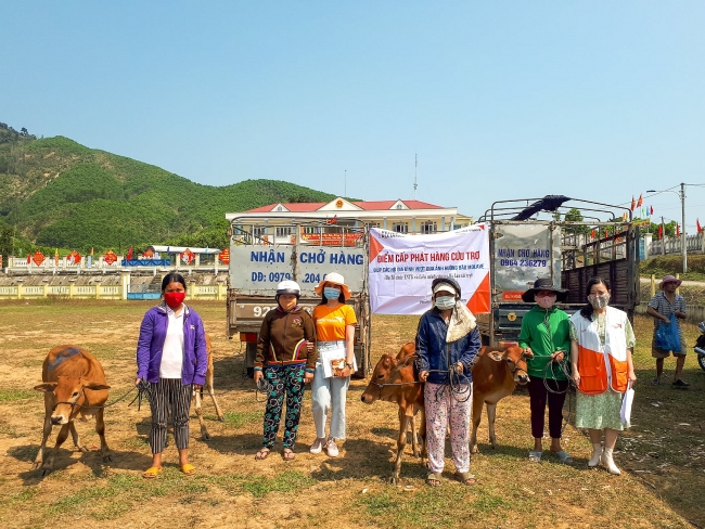 Breeding cows handed over to disaster–affected households in Quang Nam Province