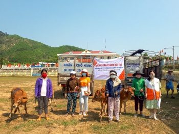 breeding cows handed over to disaster affected households in quang nam province