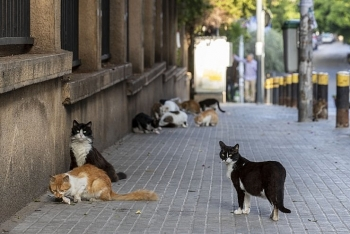 cats found able to catch coronavirus in a study dogs not likely