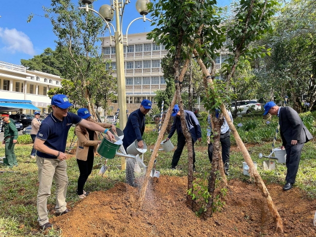 SNV contributes 3,000 cherry blossom trees for a green Vietnam