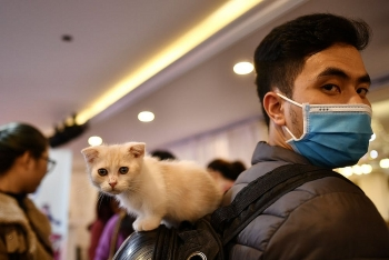 study cats can spread coronavirus to each other but unlikely infect humans
