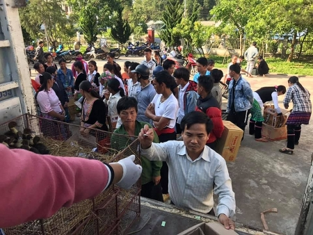 HKI Vietnam delivers over 1,000 ducks to Lai Chau's impoverished villages