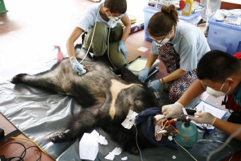 no more bars for two asiatic black bears in vietnams northern province