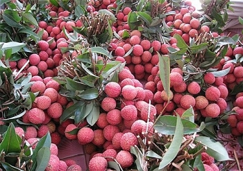 vietnams lychees export to singapore us australia
