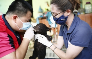 bear cub rescued from illegal wildlife trade in vietnam