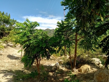 New Zealand helps fund project to plant 3 hectares of forest in Vietnam