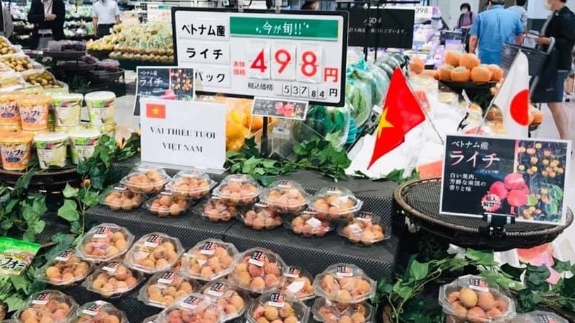 Vietnam to take initiative in monitoring lychee exports to Japan