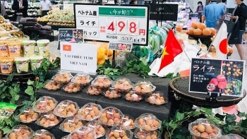 Vietnam to take initiative in monitoring lychee export to Japan