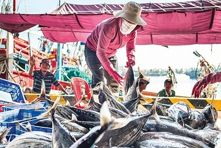 Gov't rolls out plan to implement FAO agreement on deterring IUU fishing